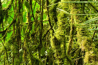 Moss covered trees