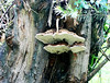 Wild mushrooms growing on a tree trunk