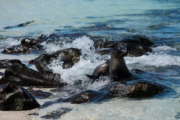 Mosquera Island, Galapagos, Ecuador