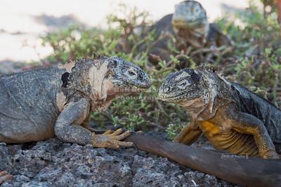 Jurassic conversations