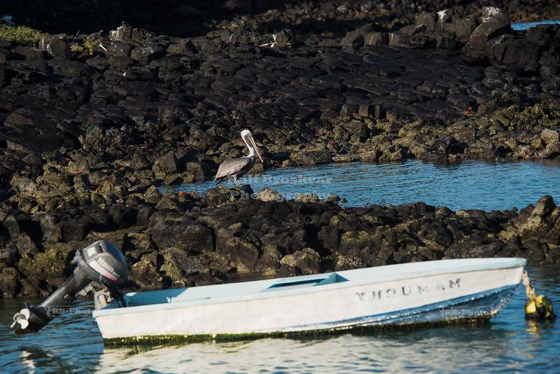 Puerto Ayora, Santa Cruz Island, Galapagos, Ecuador