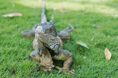 Iguana Park in Guayaquil