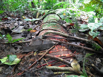In the deep jungle many roots are exposed