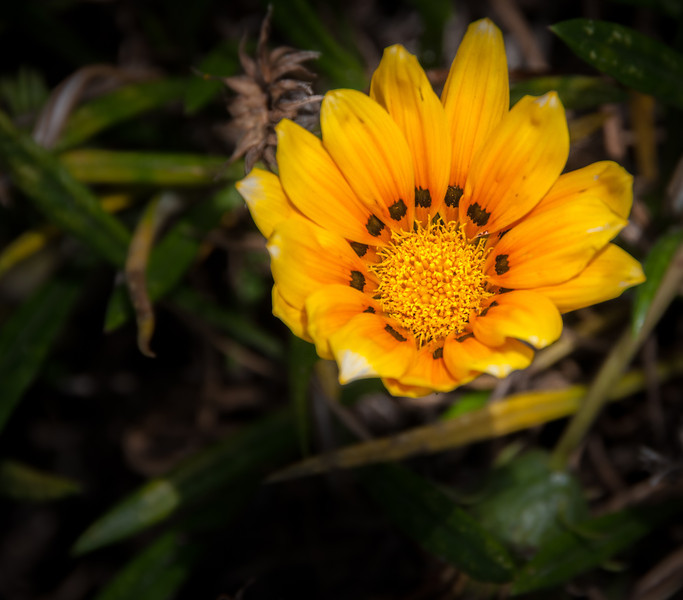 • Location - Quito, Ecuador<br /> • Flowers I saw while I was walking around outside our hotel.