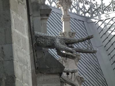 Alligators from the Amazon