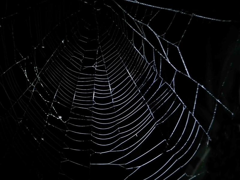 The web of the False Black Widow