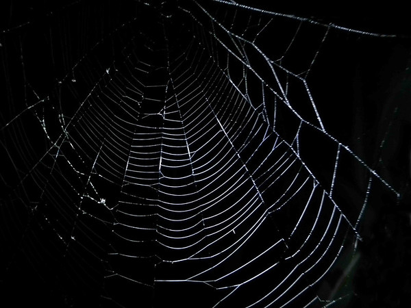 The web of the False Black Widow