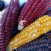 Local Dried Corn