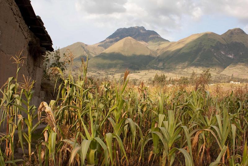 Cotachachi Corn; Imbabura Volcano, Ecuador 4,609 meters, (15,121 feet)