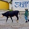 Man Walking Cow