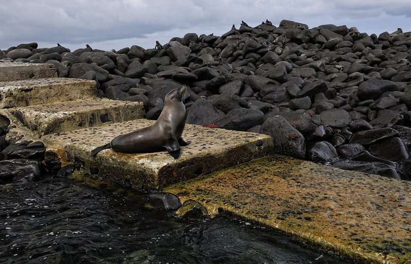 Sea lion and iguanas await