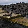 Sea lion and iguanas await