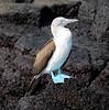 Ecuador/Galapagos Islands OAT Trip, May 2015.<br /> 14 May 2015.  Isla Floreana.
