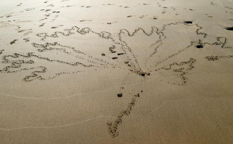 Ecuador/Galapagos Islands OAT Trip, May 2015.<br /> 14 May 2015.  Isla Floreana.  Sand crab tracks?