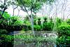 John Curran, Vilcabamba, Ecuador, Garden, 9-14-14, by Dave Harbour