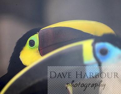 Birds, Amaru Zoo - Hornbill - 11-29-12 - by Dave Harbour