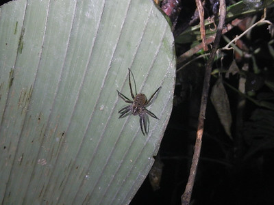 Amazing what you might see during a night walk - Ecuadorian Rainforest. Night walk along the Socali Trail - Yarina Eco Lodge.