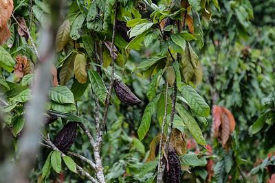 Walking through the Ecuadorian Rainforest.