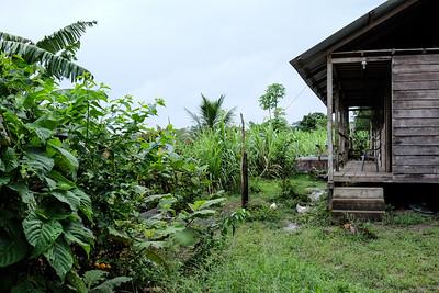A cacao plantation home.