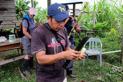 Preparing sugarcane to eat.