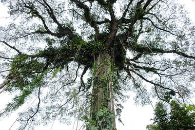 Large canopy...