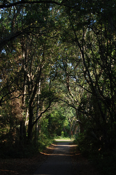 I took a spin on a bike trail across the street. the trail ran behind the houses down the middle of the island.  lots of flora/fauna and a peek at everyone's backyards.