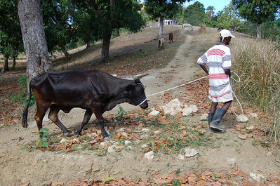 farmer with his cow
