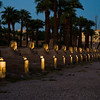 Title: Avenue of Sphinxes<br /> Date: October 2009<br /> The Avenue of Sphinxes at Luxor Temple.