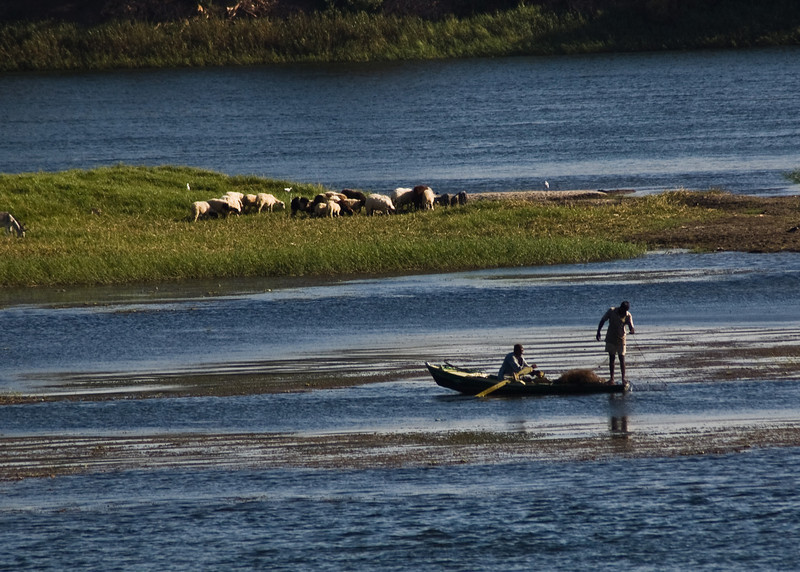 Title: Fishing By the Sheep<br /> Date: October 2009<br /> While we cruised down the Nile, we also saw everyday Egyptians working along the river.
