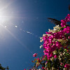 Title: Flowers at the Tropic of Cancer<br /> Date: October 2009<br /> Abu Simbel