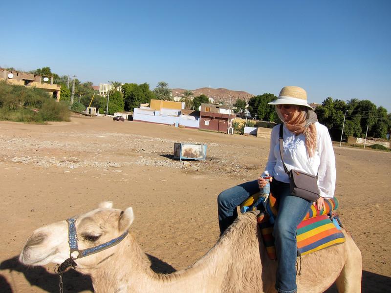 Camel Tour at Aswan (6)