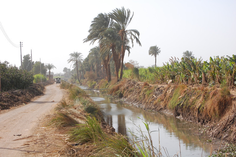 Luxor Donkey Tour (4)