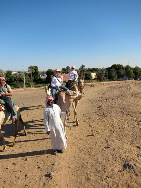 Camel Tour at Aswan (5)