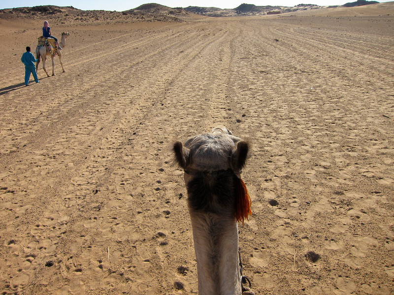 Camel Tour at Aswan (9)