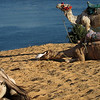 Camel Tour at Aswan (17)
