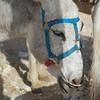 Luxor Donkey Tour