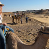 Camel Tour at Aswan (10)