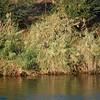 Hawk on the Nile