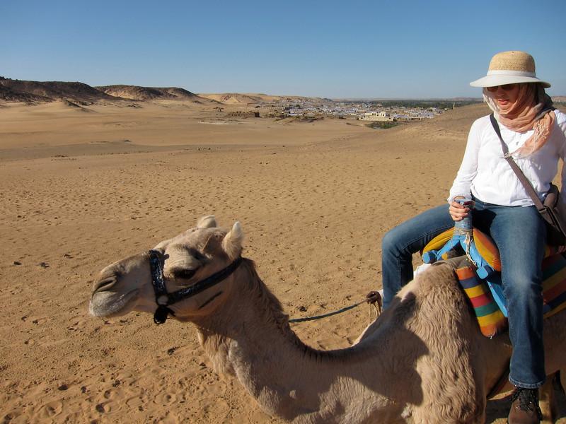 Camel Tour at Aswan (8)