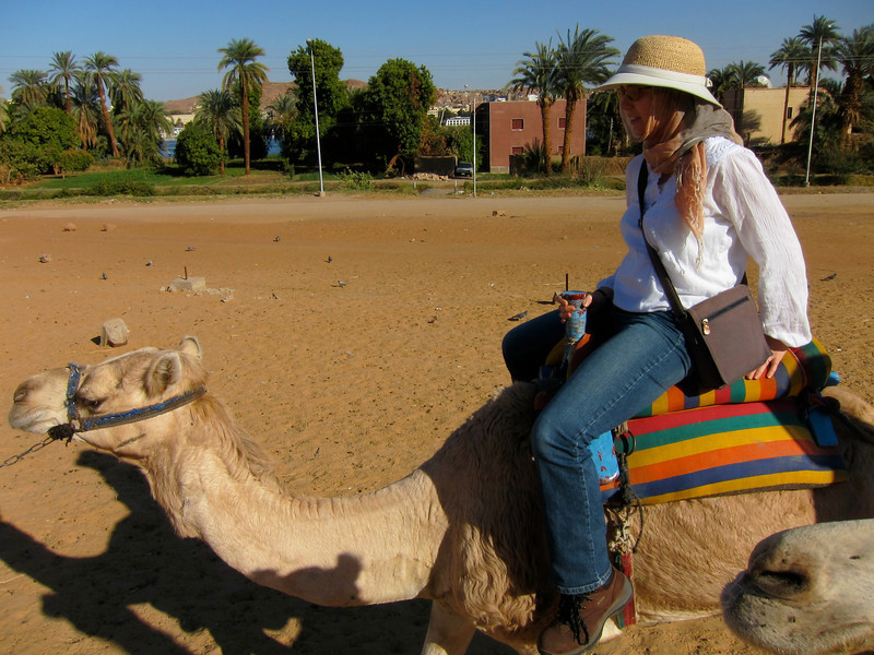 Camel Tour at Aswan (2)