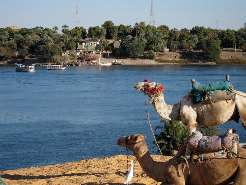 Camel Tour at Aswan (18)