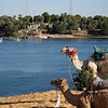 Camel Tour at Aswan (18)