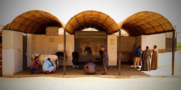 ACE - Luxor