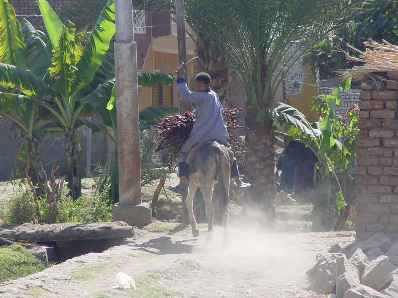 n1) A boy on a donkey carrying hibiscus tea in the village.