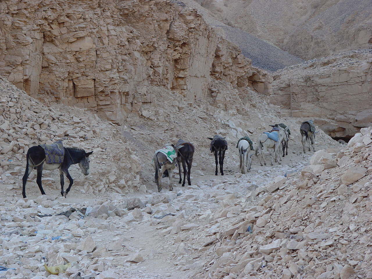 b) We leave our donkeys here and go off to explore some tombs.