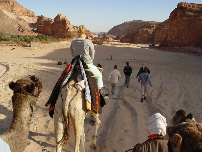 w) The next day we camel trek for several miles. I opt to buy a whole camel while some buy only half a camel. This just means sharing of camels.
