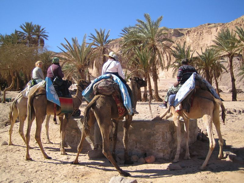 zd) The camel water hole