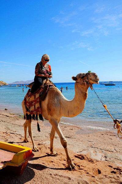 Shark Bay, near our hotel in Sharm-el-Sheikh, Sinai, Egypt  - Dawn on camel