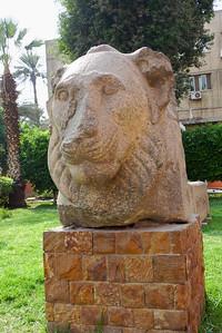 2009-10 Egypt-1000736
