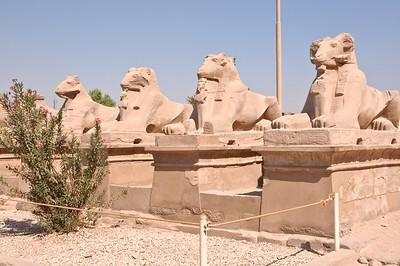 2009-10 Egypt-8569